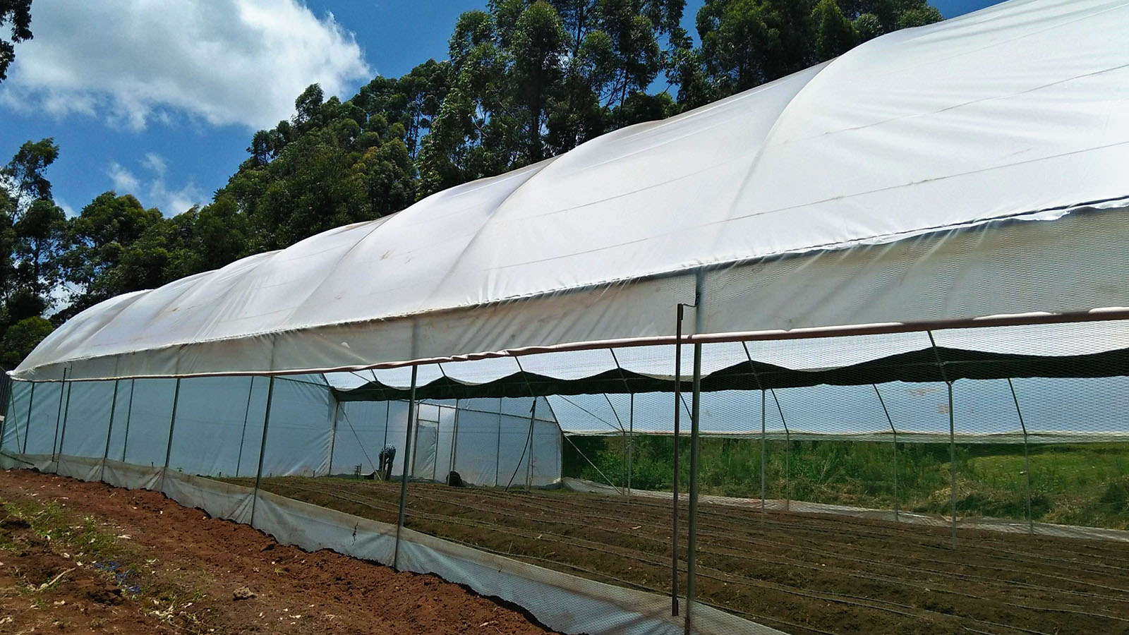 Grekkon kenya greenhouse solutions