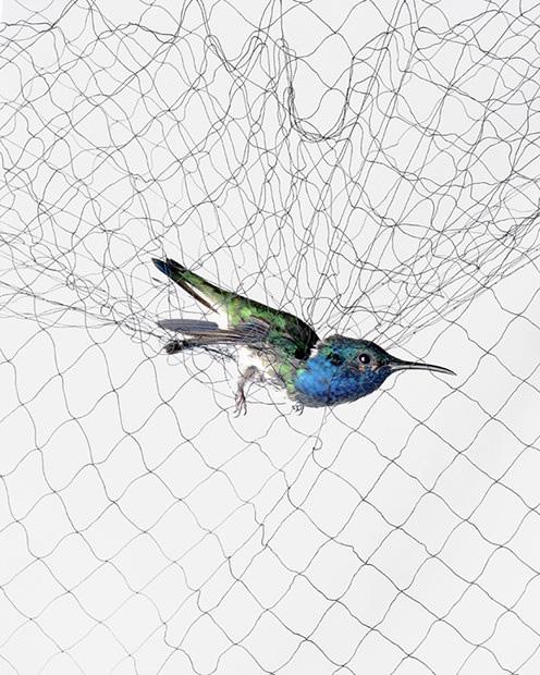 grekkon Bird nets