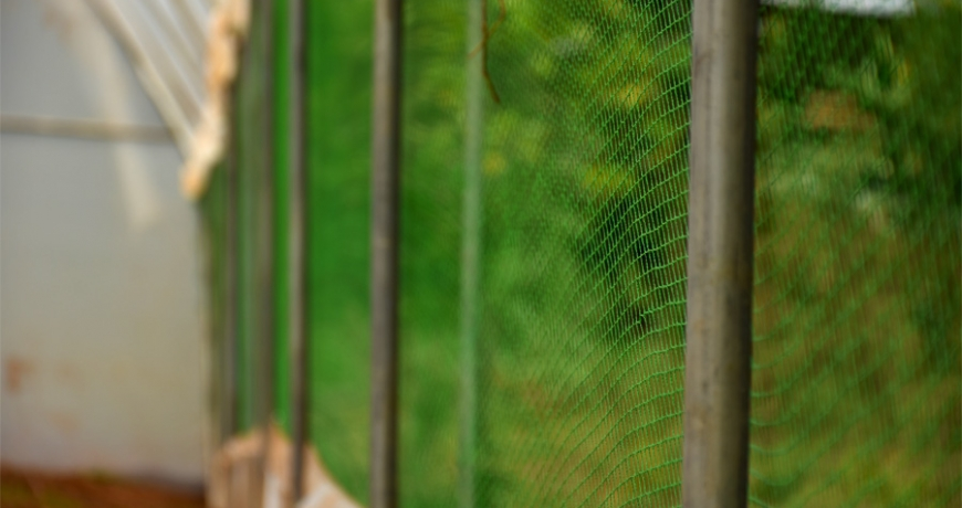 Agricultural pest nets