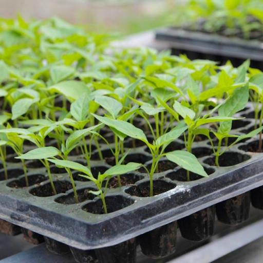 grekkon Seedling trays
