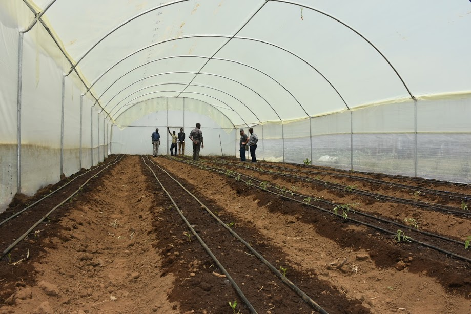 Your Greenhouse Polythene