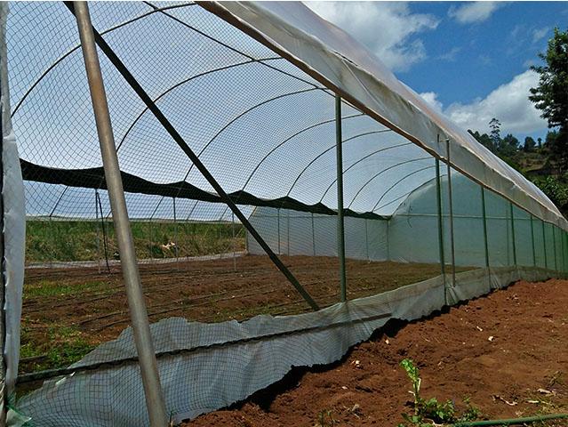 grekkon greenhouse