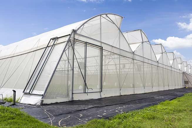grekkon insect nets