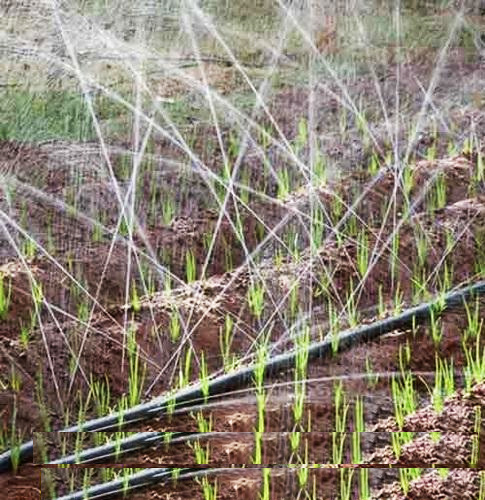 grekkon rain hose