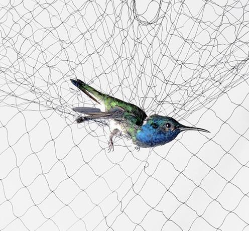 Bird nets by Grekkon Limited