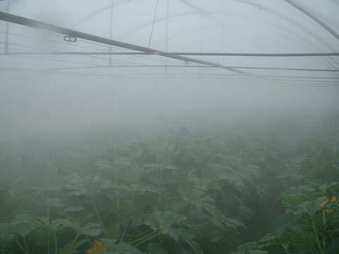 Fogging System for Greenhouses