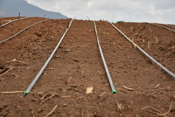 How To Unblock A Drip Irrigation System
