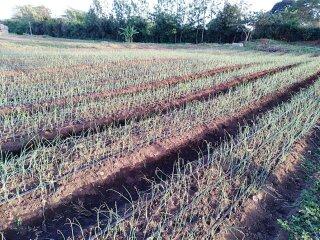 Smallholder Farmers Irrigation In Africa
