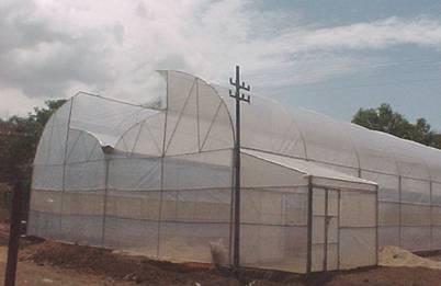 Kenya's Greenhouse Construction Company
